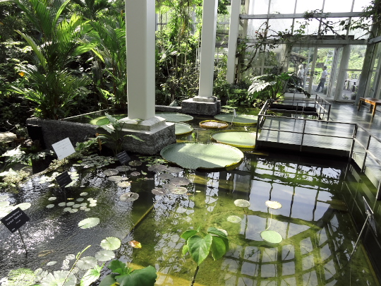 温室の池.jpg